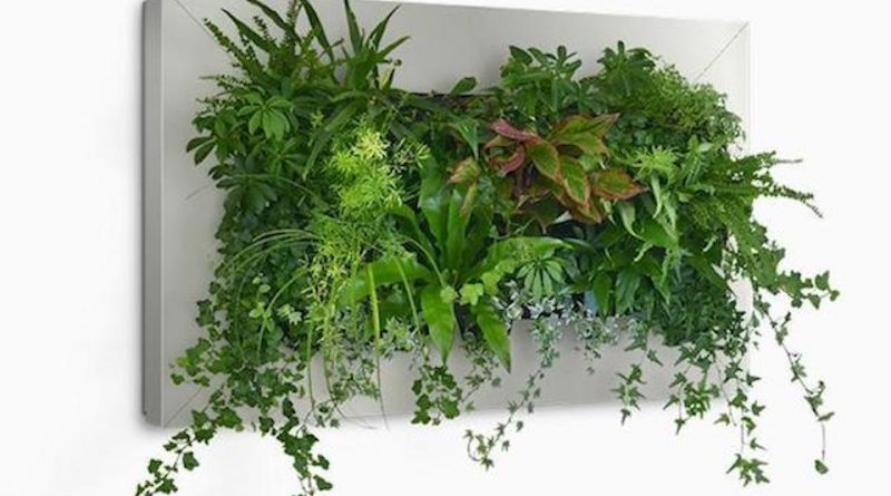 Cadre végétal mural